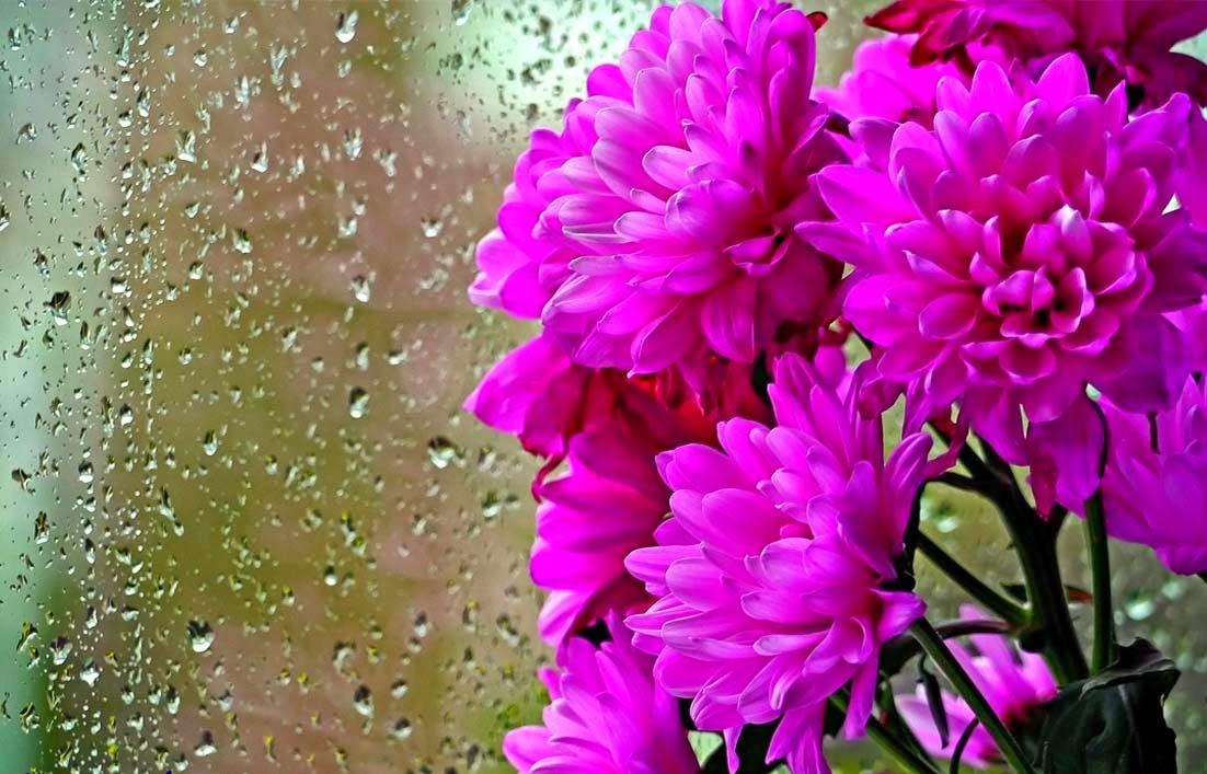 Bunga krisana dalam buket