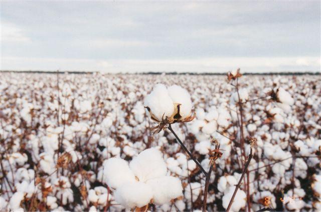 Bien-aimé Thème : Joli Coton | Plume & Ruban QG01