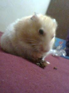 my pet :)