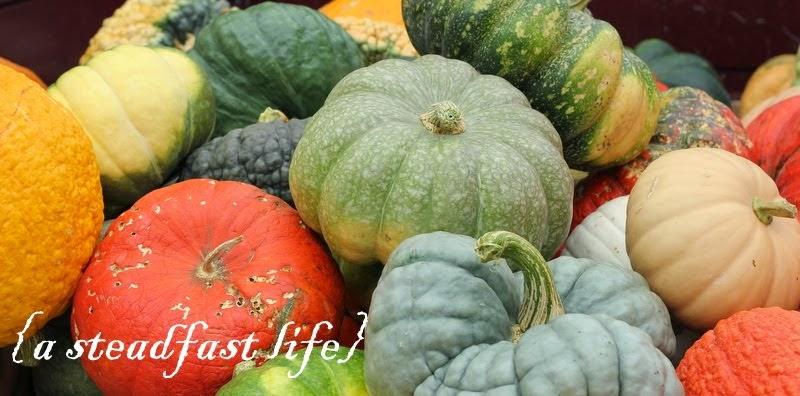 A Steadfast Life