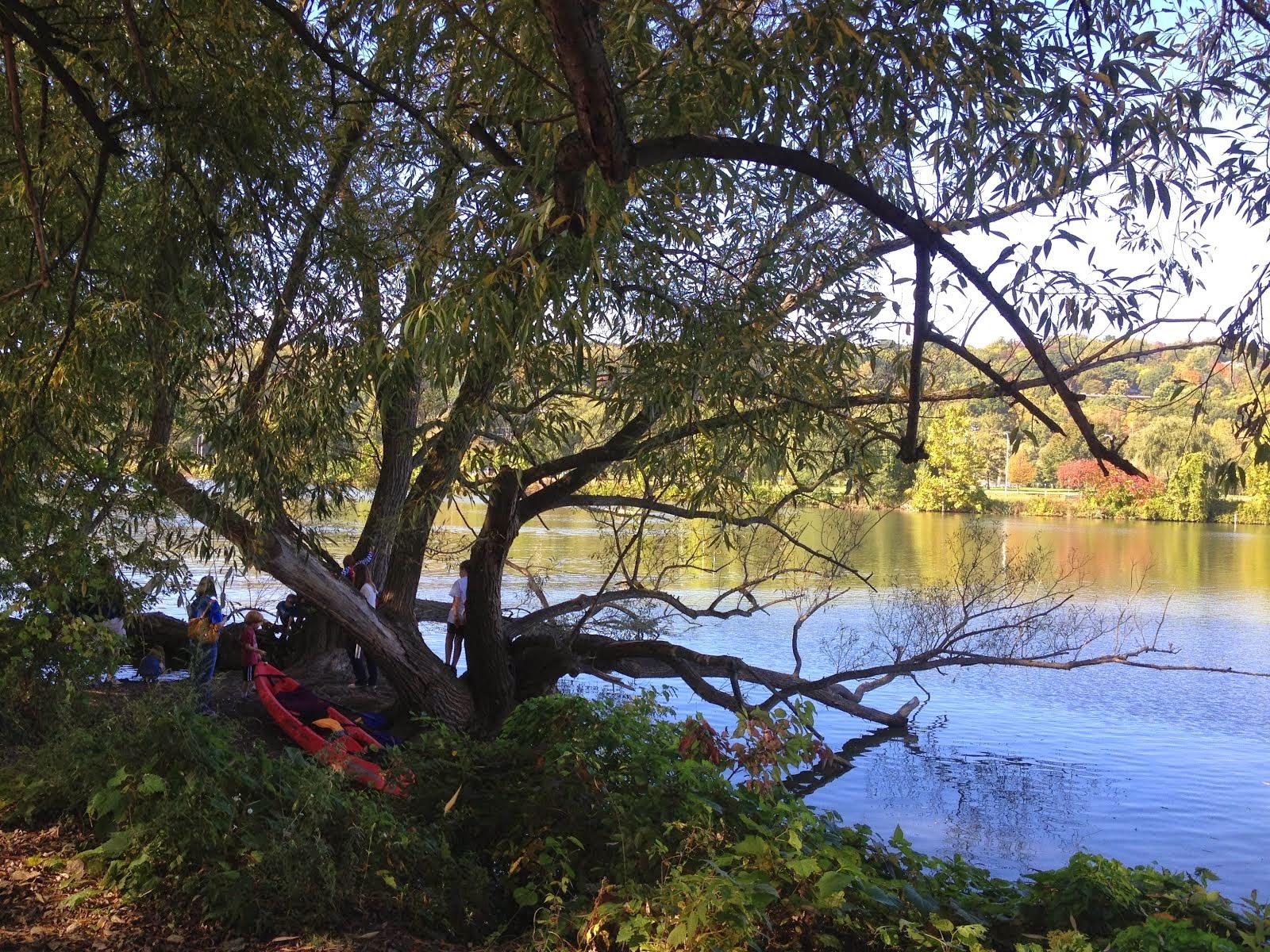 Ithaca Tree