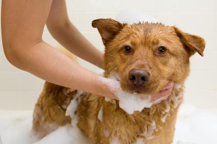 Fare il bagno al cane pets life - Fare il bagno al cane dopo mangiato ...