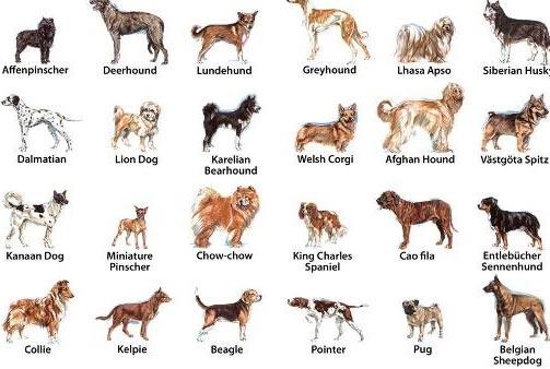 Como escoger el Perro Ideal: Tipos de Razas