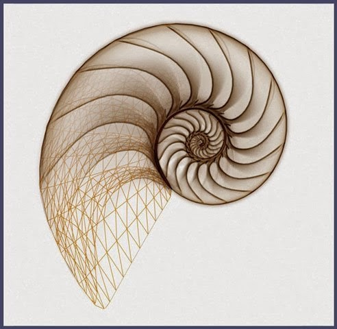 Spiral shell of the nautilus