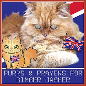Purrs and Prayers for