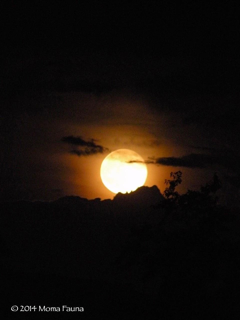 Buck Moon Rising 3