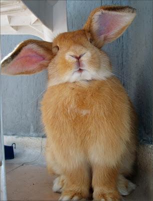 ارنب مضحك