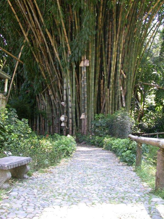 Hermosas fotos del jard n bot nico la laguna parte ii el for Jardin botanico numero telefonico