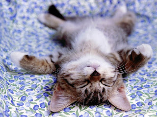 Cute Cat Sleep