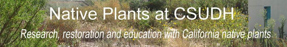 Native Plants at CSU Dominguez Hills