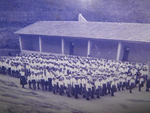 História Viva - 60 anos de escola