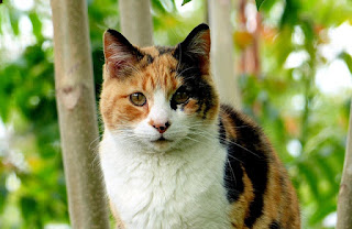A calico cat sitting outside among some trees.