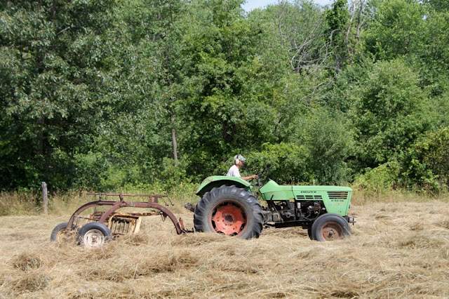 Raking straw-like hay at the Little Farm