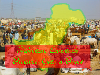 Pakistan: Livestock business gets a boost