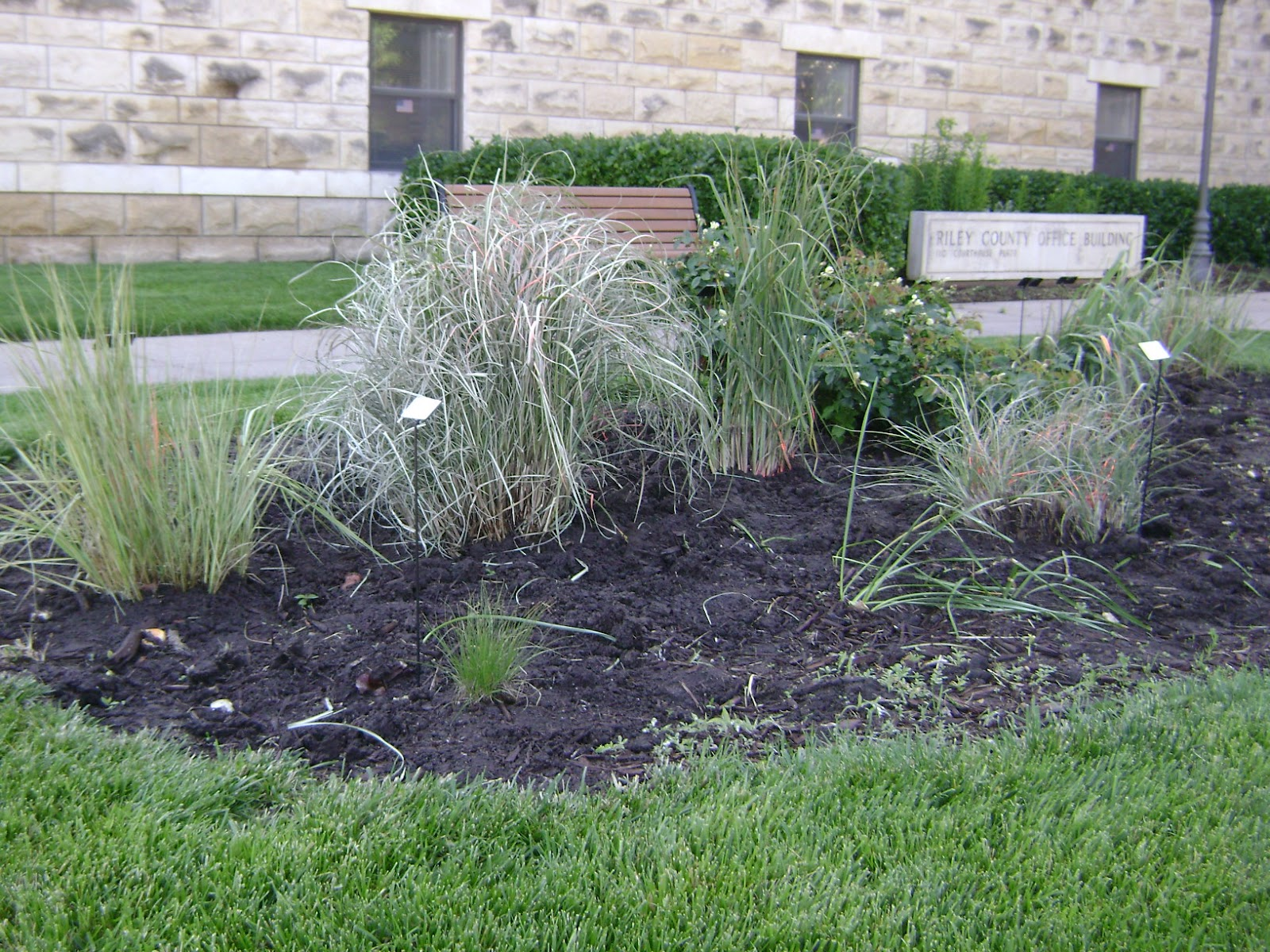 Riley county extension blog may 2012 for Ornamental grass bed