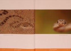 FOTO PUBLICADA EM LIVRO NO QATAR