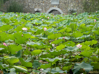 water lillies at summer palace china july 2012 by garden muses: a Toronto gardening blog
