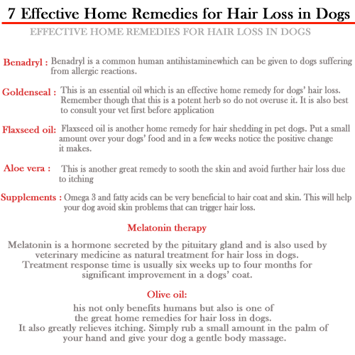 Natural Remedies For Alopecia In Dogs