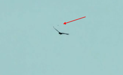UFO News, UFO Caught Hovering Near Eagle, UFO Sighting News