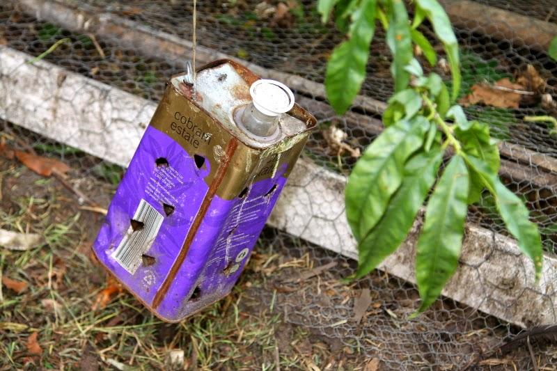 State of the art technology - Maggot grower tin