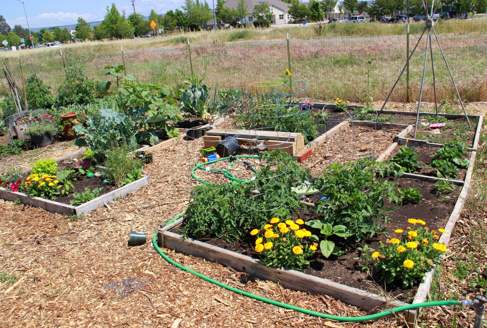 My first garden may 2015 for Community garden designs