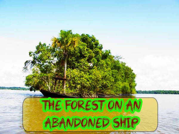 The Forest on an Abandoned Ship