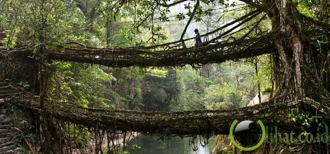 Jembatan Akar Pohon
