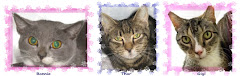 12/20/11&#39;Bonnie, Thor &amp; Gigi were pulled from the shelter now in foster CLIC PIC Please.