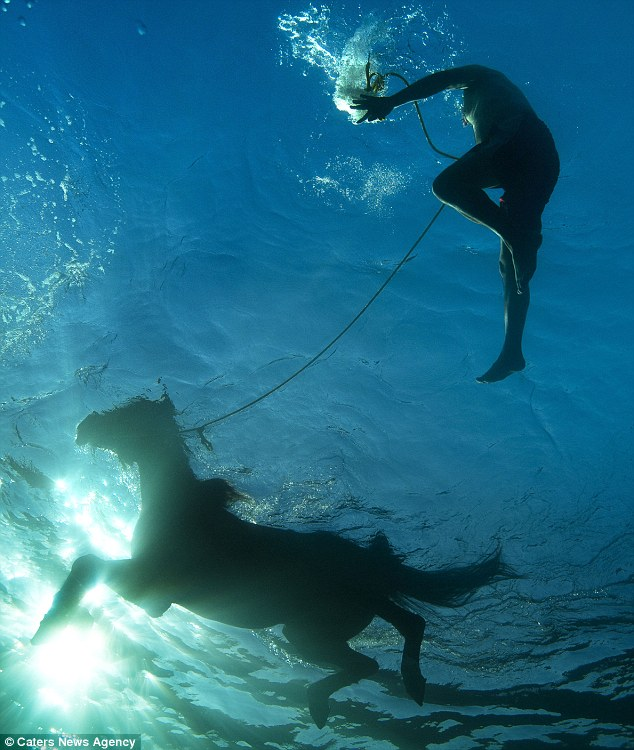 Gambar-gambar kuda berenang dari dalam air laut