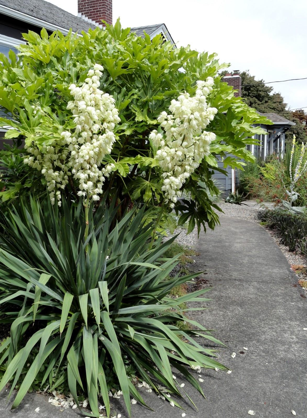 danger garden blooms for july. Black Bedroom Furniture Sets. Home Design Ideas