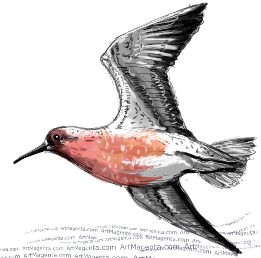 En fågelmålning av en kustsnäppa från Artmagentas svenska galleri om fåglar