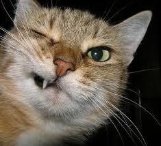 Gambar Kucing Gokil aneh