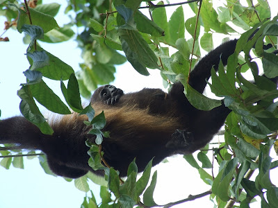 wildlife in Nicaragua