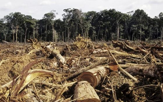 http://www.toute-lactu.com/2011/11/25/600-millions-de-dollars-pour-lutter-contre-la-deforestation/