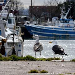 Photographies de Dieppe et d'Ailleurs.( III ).©Yann PELCAT