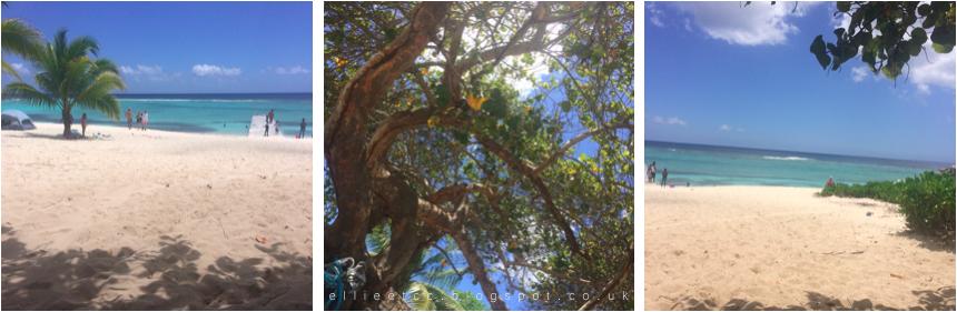 beach, Caribbean, Grand Cayman, holiday, lifestyle, travel, turtles, Spotts Beach