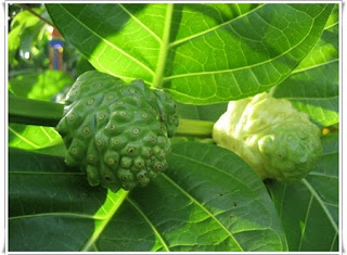 Noni fruit help sleep comfortably