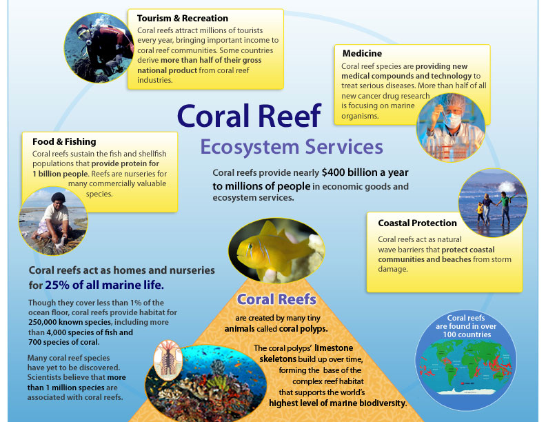 the importance of preserving coral reef and mangrove communities With coral reefs in decline and noaa calling for a larger protected area for reefs in the gulf of mexico, us geological survey scientists are pointing out another strategy to save reefs: first.