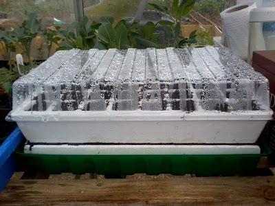 Self watering propagator