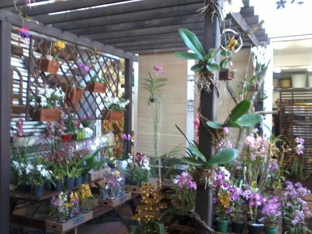 Fênix Plantas e Jardins: ORQUÍDEAS: Como montar um