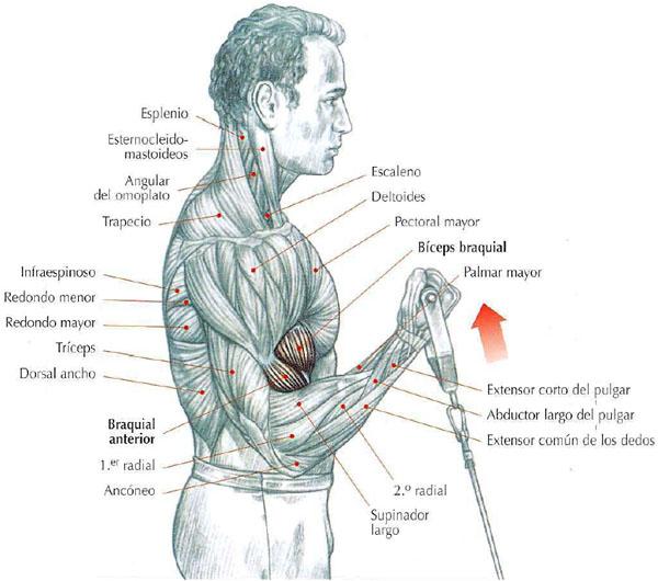 el deca durabolin es un esteroide