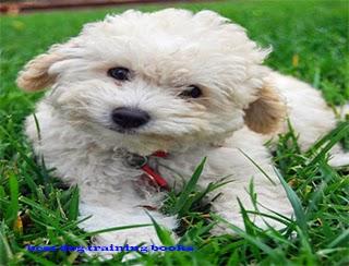 http://pet-world9.blogspot.com/2014/04/the-chow-chow.html