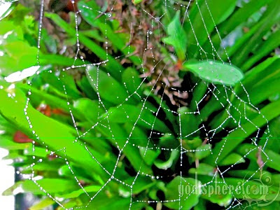 Spider web catching beads of dew after the rain