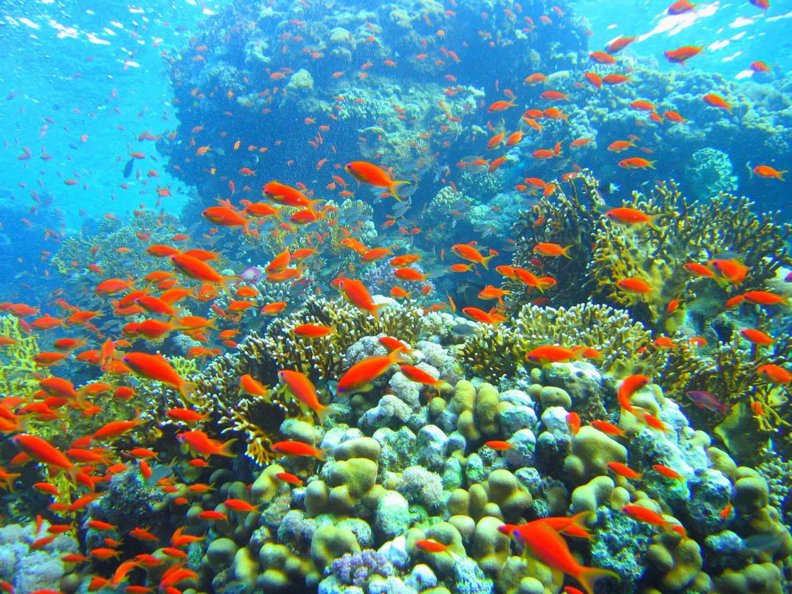 http://2.bp.blogspot.com/--UO5tPyVu-E/TcHk0C9kc_I/AAAAAAAAAIA/ww1ypbZkHp0/s1600/Coral_reef_in_Ras_Muhammad_nature_park_%2528Iolanda_reef%2529.jpg