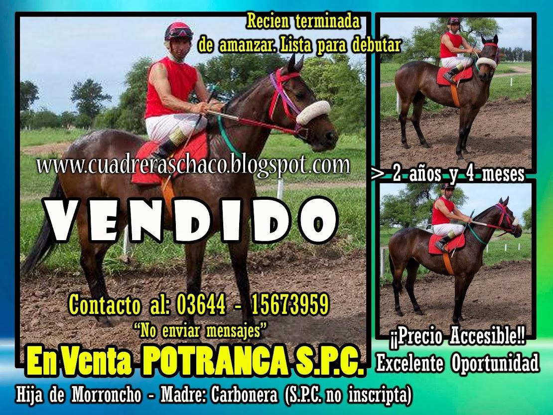 POTRANCA EN VENTA 14-11-13