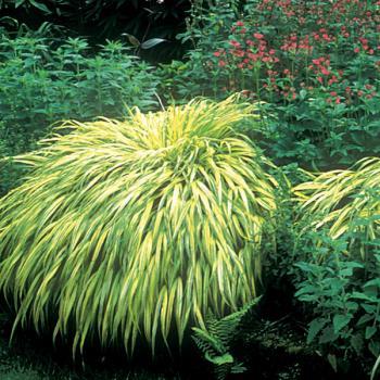 Jardin alsace vignoble - Amenagement petit jardin bambou calais ...