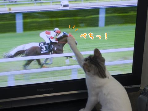 競馬が好きな子猫