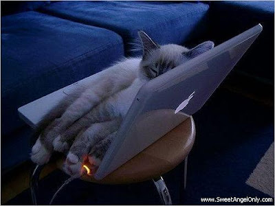 funny_picture_cat_on_lappy
