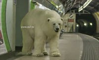 """Polar Bear"" shocks commuters on London Roads and the tube"