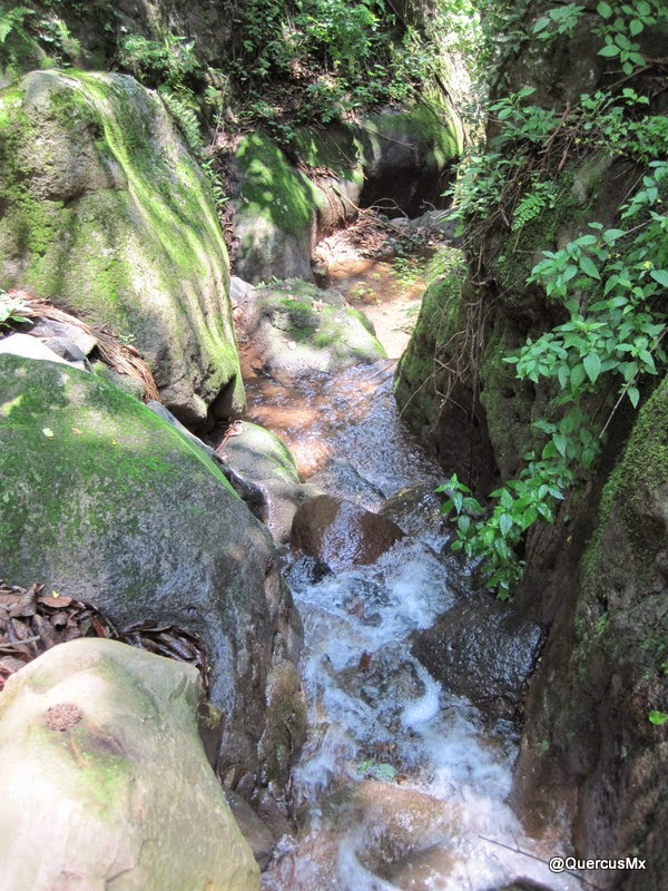 Entrando formalmente al Cañón El Mante Nombre dado por QuercusMx - Cerro Viejo